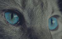 Kedi Kısırlaştırma Fiyatı Ne Kadar